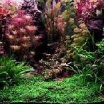 Planten Verzorging