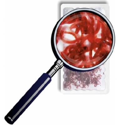 Rode muggelarven