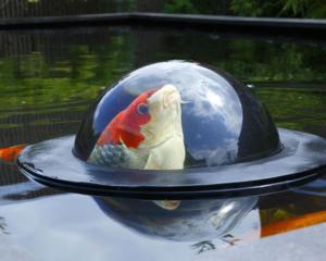 fish dome